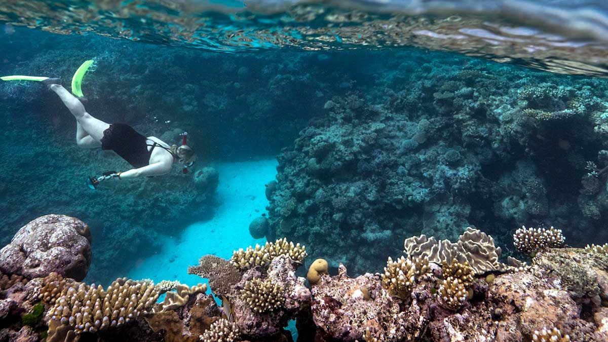 How Coral Reefs Support Local Communities Sustainable
