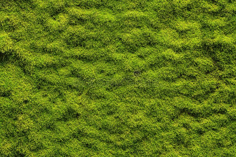 Moss texture. Background with copy space , AFF, texture