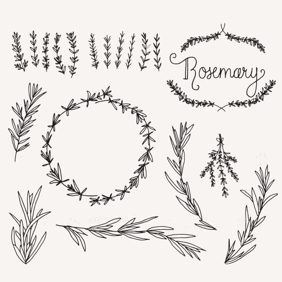 Rosemary Sprigs Clip Art Photoshop Brushes Hand Drawn