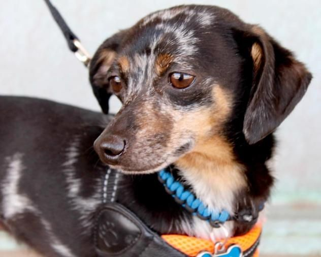 Adopt Dozier on Dogs, Adoption, Pets