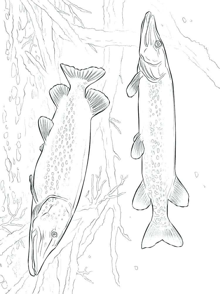 Pout Pout Fish Coloring Page Youngandtae Com In 2020 Fish Coloring Page Coloring Pages Pout Pout Fish