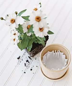 Gardening New Uses For Old Things Flower Pots Coffee Filters Plants