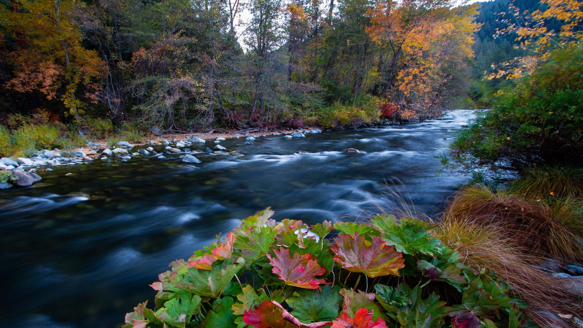 rivers forests autumn wallpaper [1920x1080]   Reddit HD Wallpapers   Autumn wallpaper hd ...