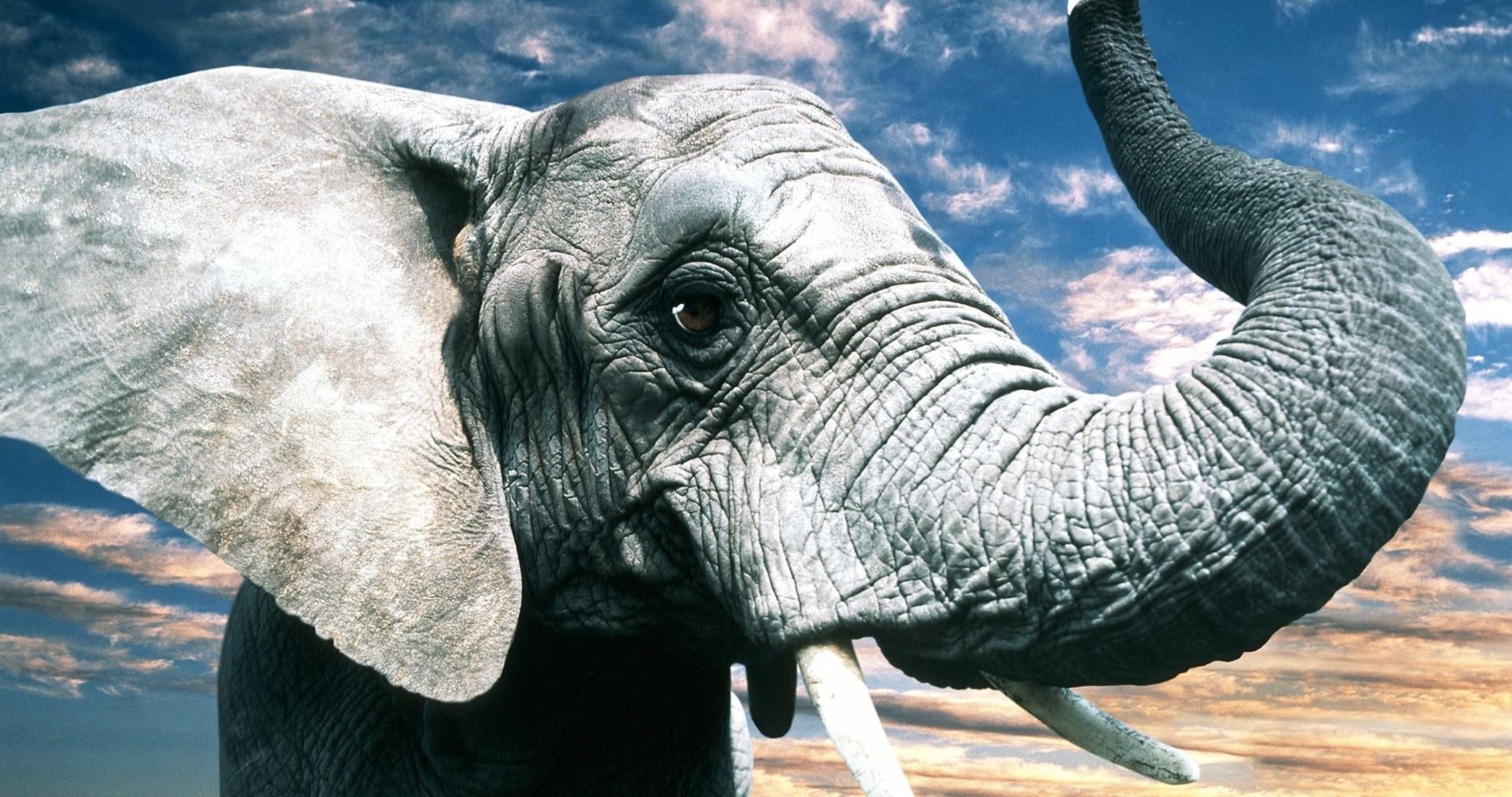 gray elephant 4k ultra hd wallpaper | Elephant, Animals ...