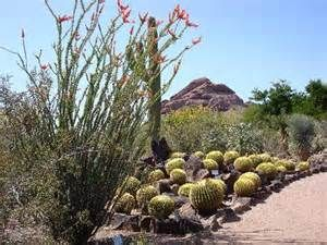 desert botanical garden - - Yahoo Image Search Results