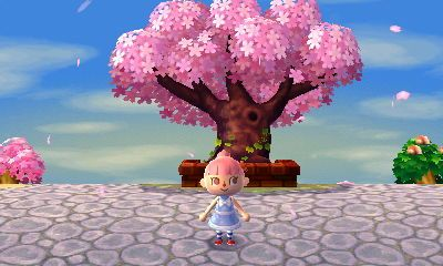 The Cherry Blossom Petals Falling Down To The Ground Photo Taken A Long Time I Haven T Post Animal Crossi Post Animal Cherry Blossom Petals Animal Crossing