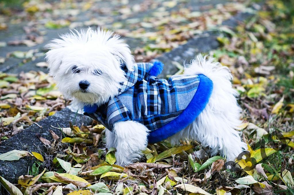 Pelo Elegancki Plaszczyk Krata Sztruks Cieply 2076197704 Oficjalne Archiwum Allegro Animals Dogs Character