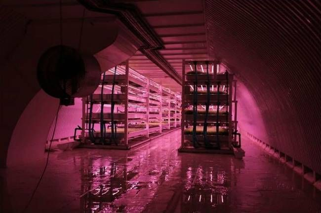 Underground bomb shelter converted into hydroponic farm in London