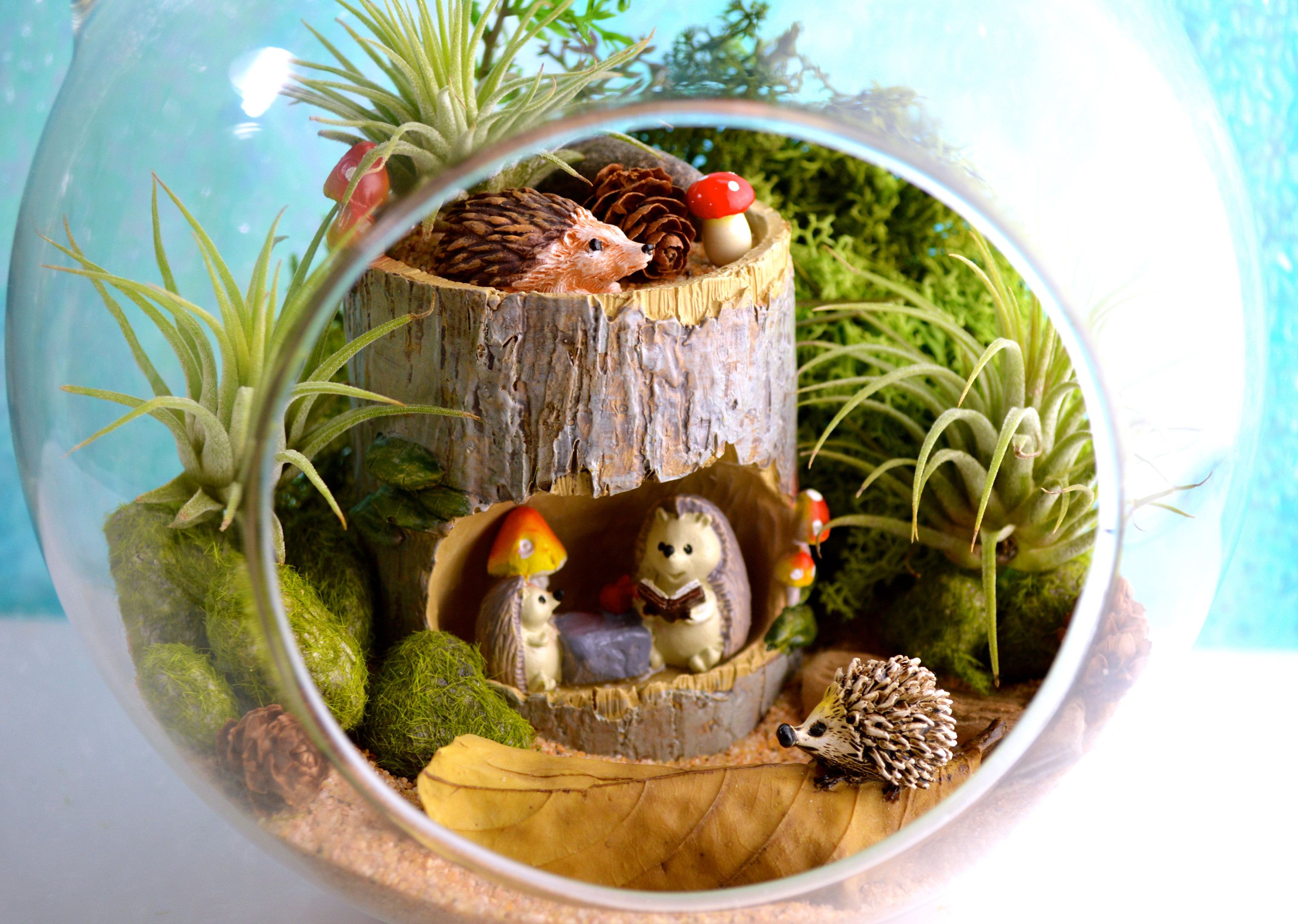 hedgehog terrarium kit 4 hedgehogs to be exact 7 glass globe 3 air plants miniature. Black Bedroom Furniture Sets. Home Design Ideas