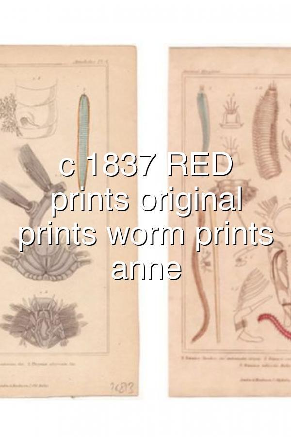 C 1837 Red Annelid Prints Original Antique Prints Worm Prints Capitellid Anne In 2020 Annelid Antique Prints Prints