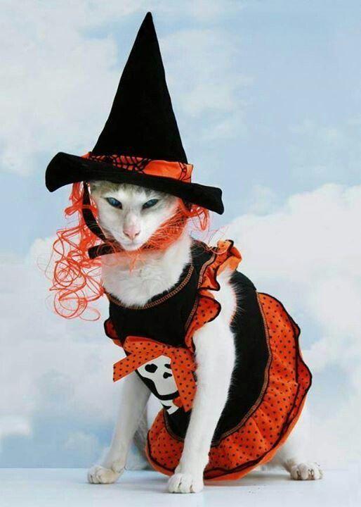 E' ormai alle porte la notte di #Halloween! Avete già deciso cosa #indossare per il vostro #party di Halloween?http://bit.ly/H7Ans6