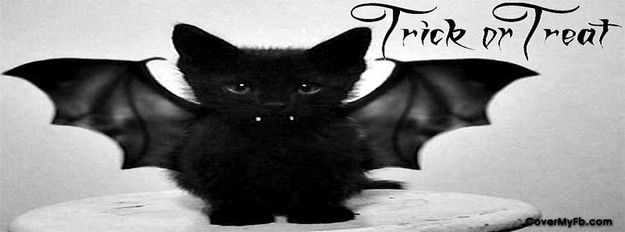 Bat Cat Facebook Cover