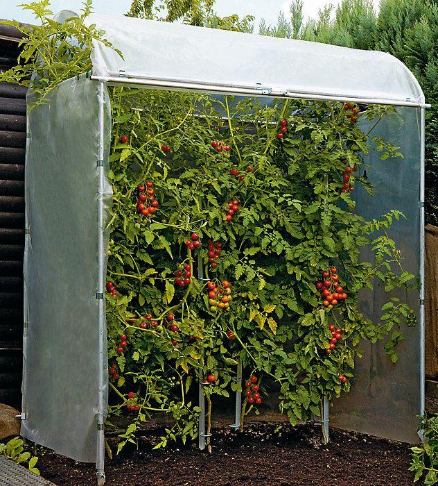 Tomatenhaus Stahl verzinkt Bauerngarten Tomaten haus