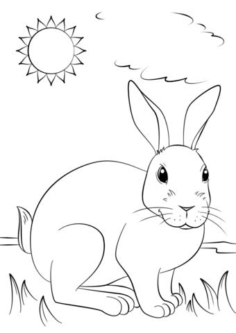 Popular Rabbit Coloring Book 65 Cute Rabbit coloring page