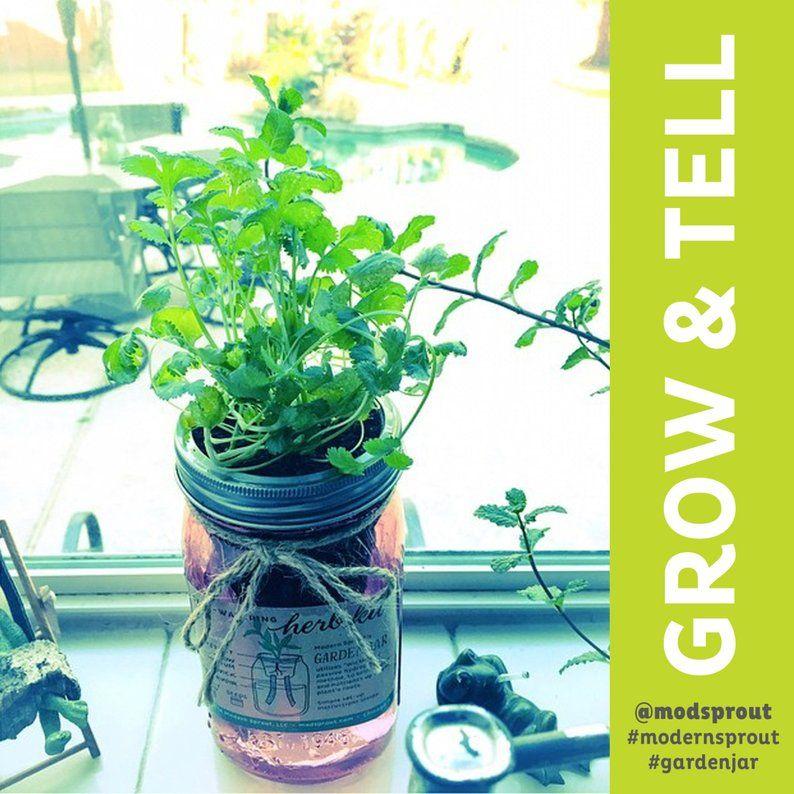 Garden jar selfwatering herb kit cilantro self