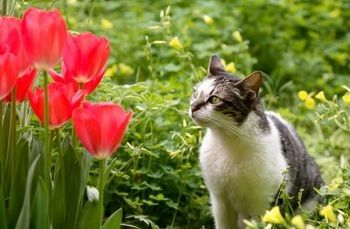 Keeping Cats Out Of Your Flower Bed Garden Flower Beds Flower Beds Cat Repellant Outdoor