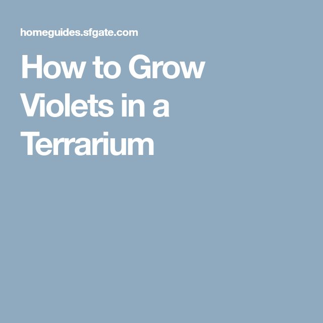 How to Grow Violets in a Terrarium