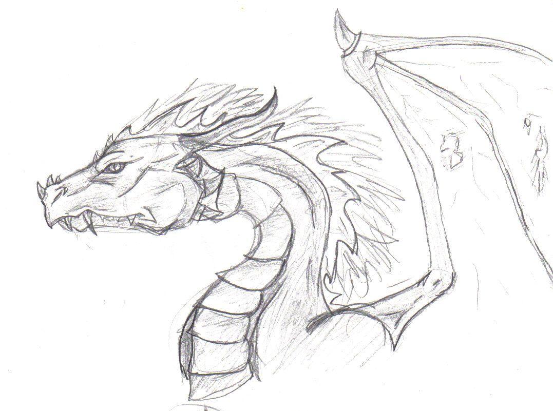 Dragon Head -Sketch by ~CanisLupes on deviantART | Dragons ...