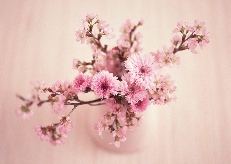 Flower pink flowers pretty