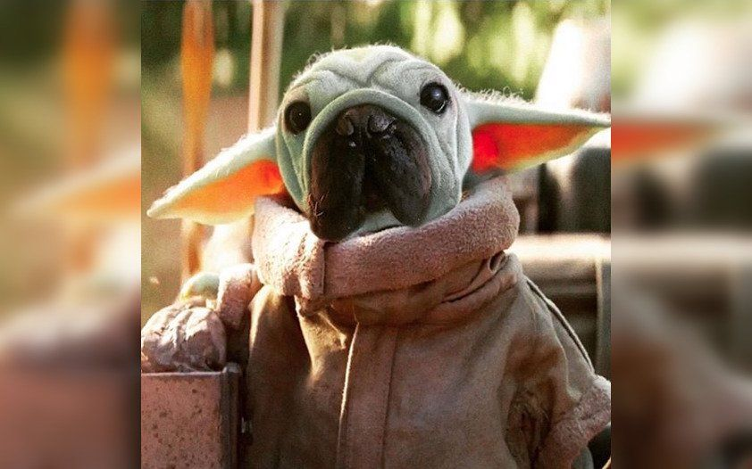 If You Thought Baby Yoda Was Cute Prepare Yourself Because This