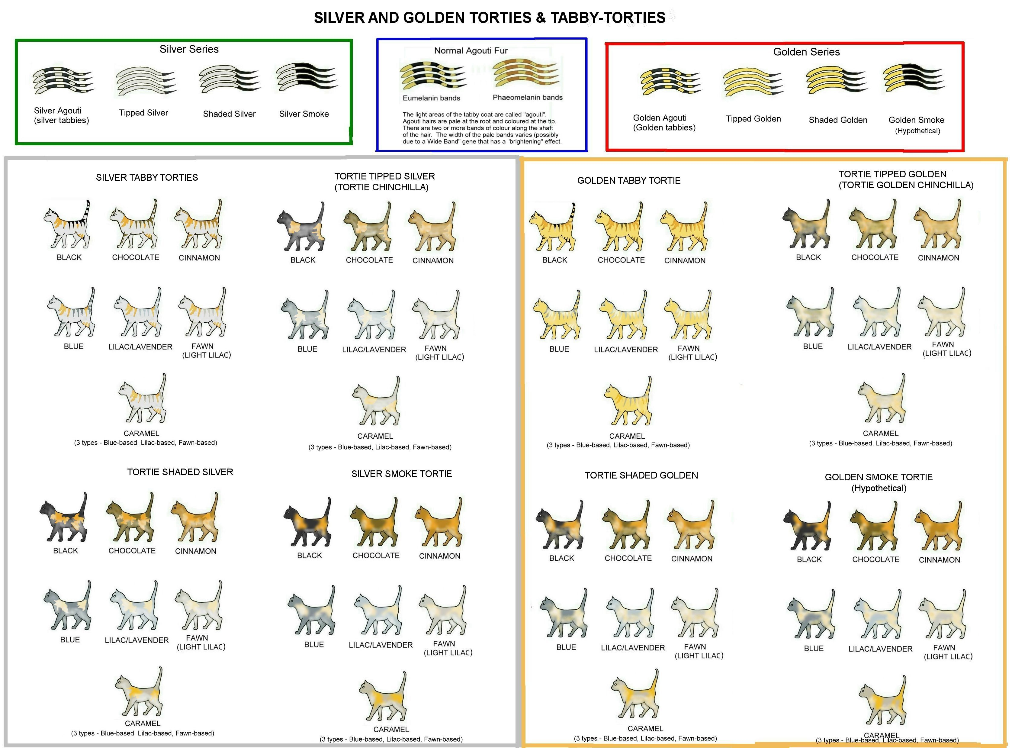 Colour And Pattern Charts Cat Colors Tortie Genetics