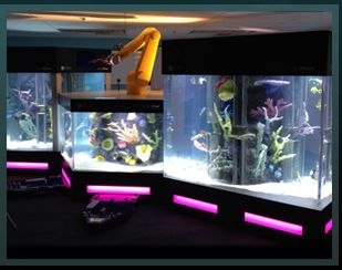Acrylic Tank Manufacturing Of Las Vegas, Nevada. Aquarium Rocks ...