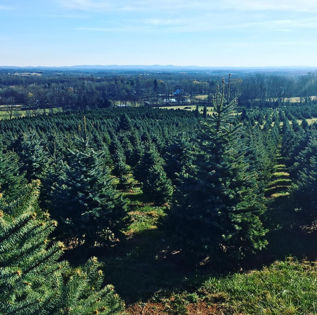 Create Holiday Memories At Loudoun Christmas Tree Farms In 2020 Christmas Tree Farm Holiday Memories Tree Farms
