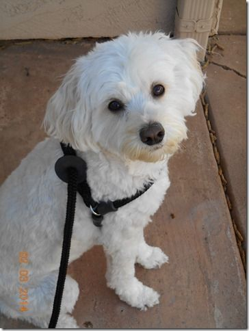 Escape Proof Dog Harness; Good for Pullers, Too! Review of the - best of convert api blueprint to swagger