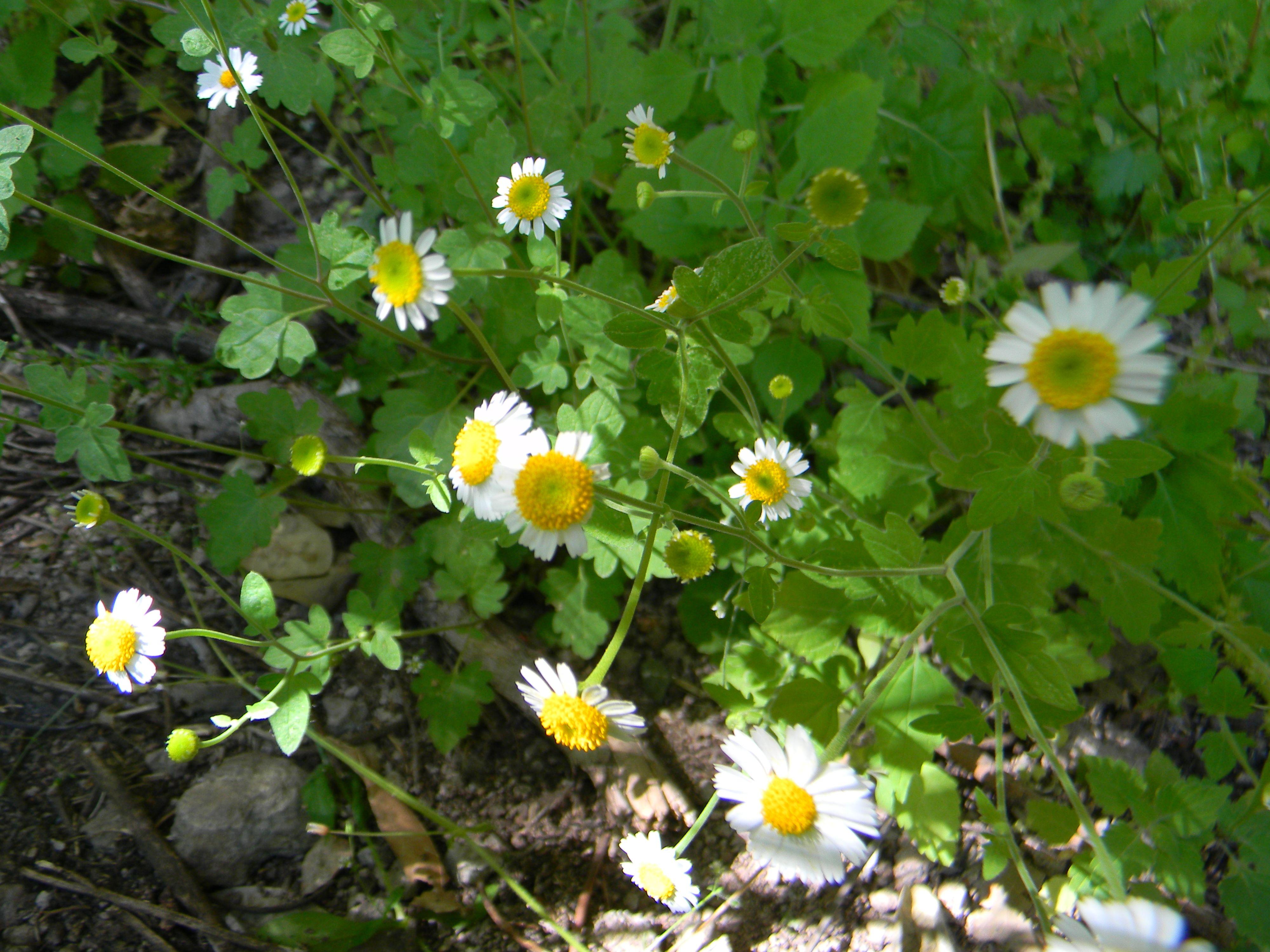 High desert flowers in bloom
