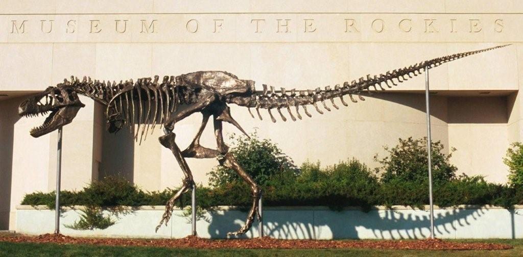"MOR_T_Rex.jpg (1024×504) - Réplique en bronze du T. rex, MOR 555 (""Wankelrex""), surnommé ""Big Mike"", the Museum of the Rockies. Dinosauria, Saurischia, Theropoda, Tyrannosauroidea, Tyrannosauridae, Tyrannosaurinae. Auteur : Wedwards ca, 2009."