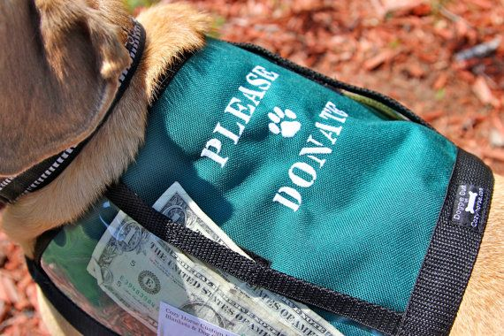 Custom Made Fundraiser Dog Vest With Large Clear By Cozyhorse