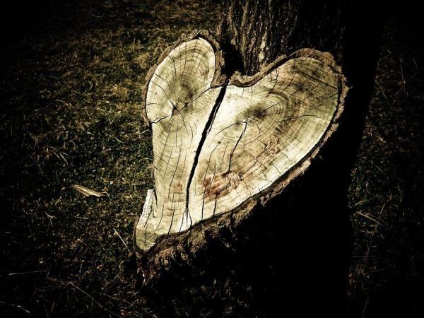 Broken Heart Treekes Me A Little Sad Only For The Broken