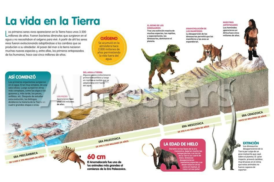 Imgc Allpostersimages Com Img Print Posters Infografia Que Describe La Evolucion De La Vida En La Tierra A Traves Education Poster Design Education Poster Life