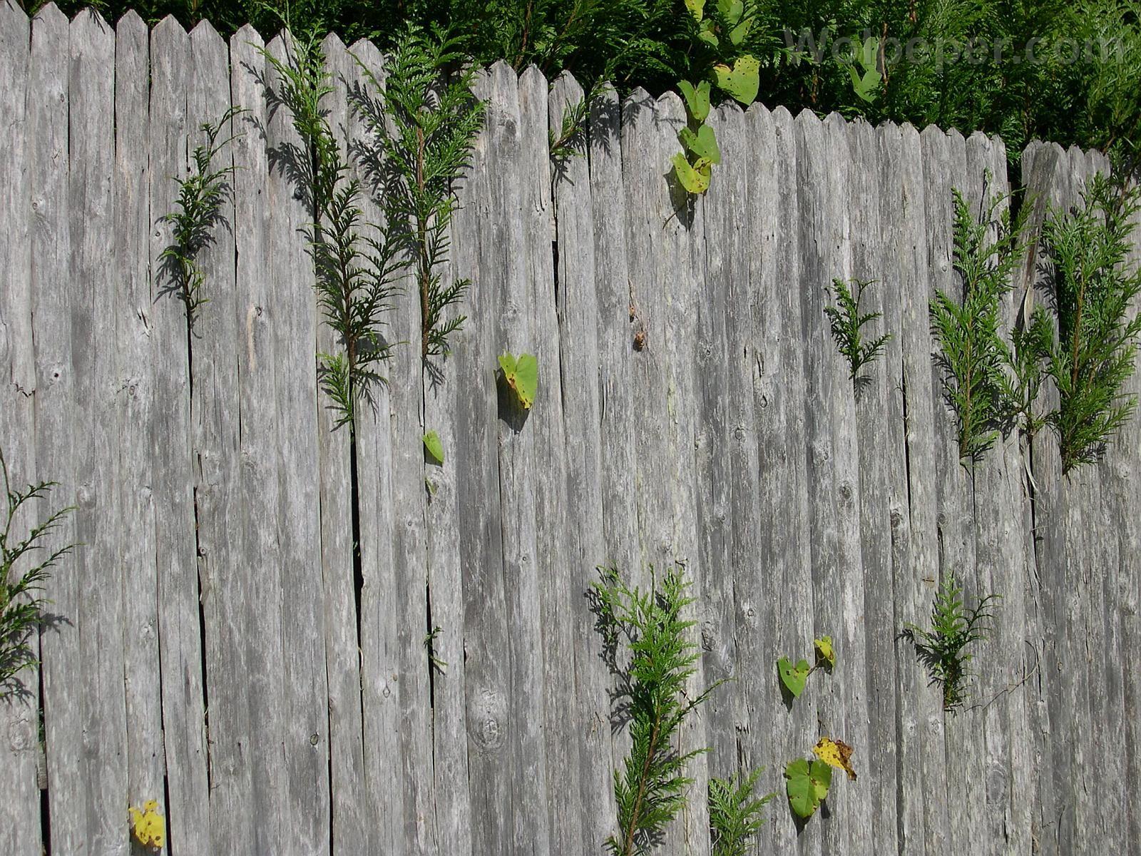 Pallisade palissade de bois non vernie vous pouvez - Palissade bois jardin ...
