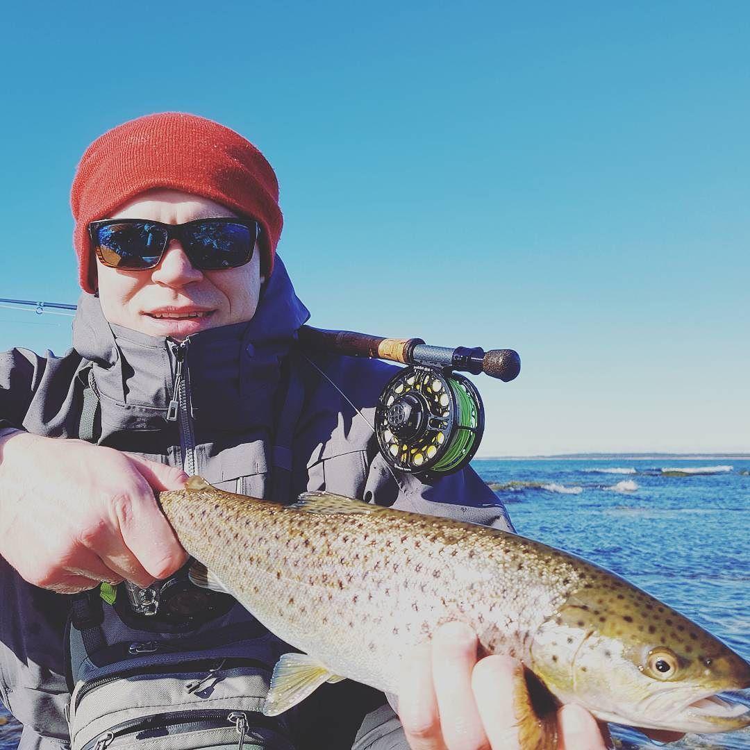 Gotland Day 4. 45'er still 5cm under limit.. second fish. Got one on video yesterday evening same size.. coming up.. Lets continue.  #patagonia #gloomis #einarssonreels #einarssonflyfishing #northflyfishing #seatrout