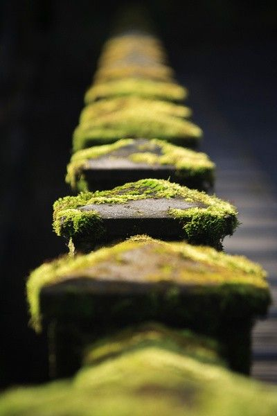 repetitions & moss