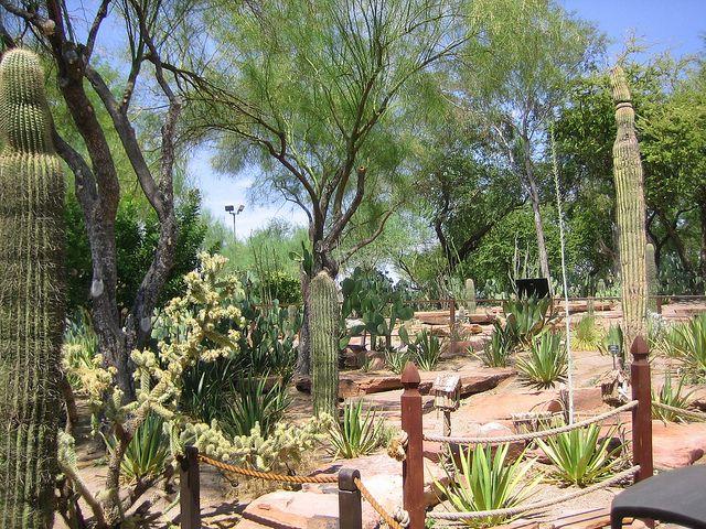 Jardim De Cactos No Ethel M Chocolate Factory And Botanical Cactus Garden Viagem Turismo
