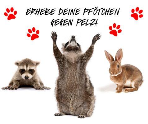 Gegen Tierquälerei Bilder