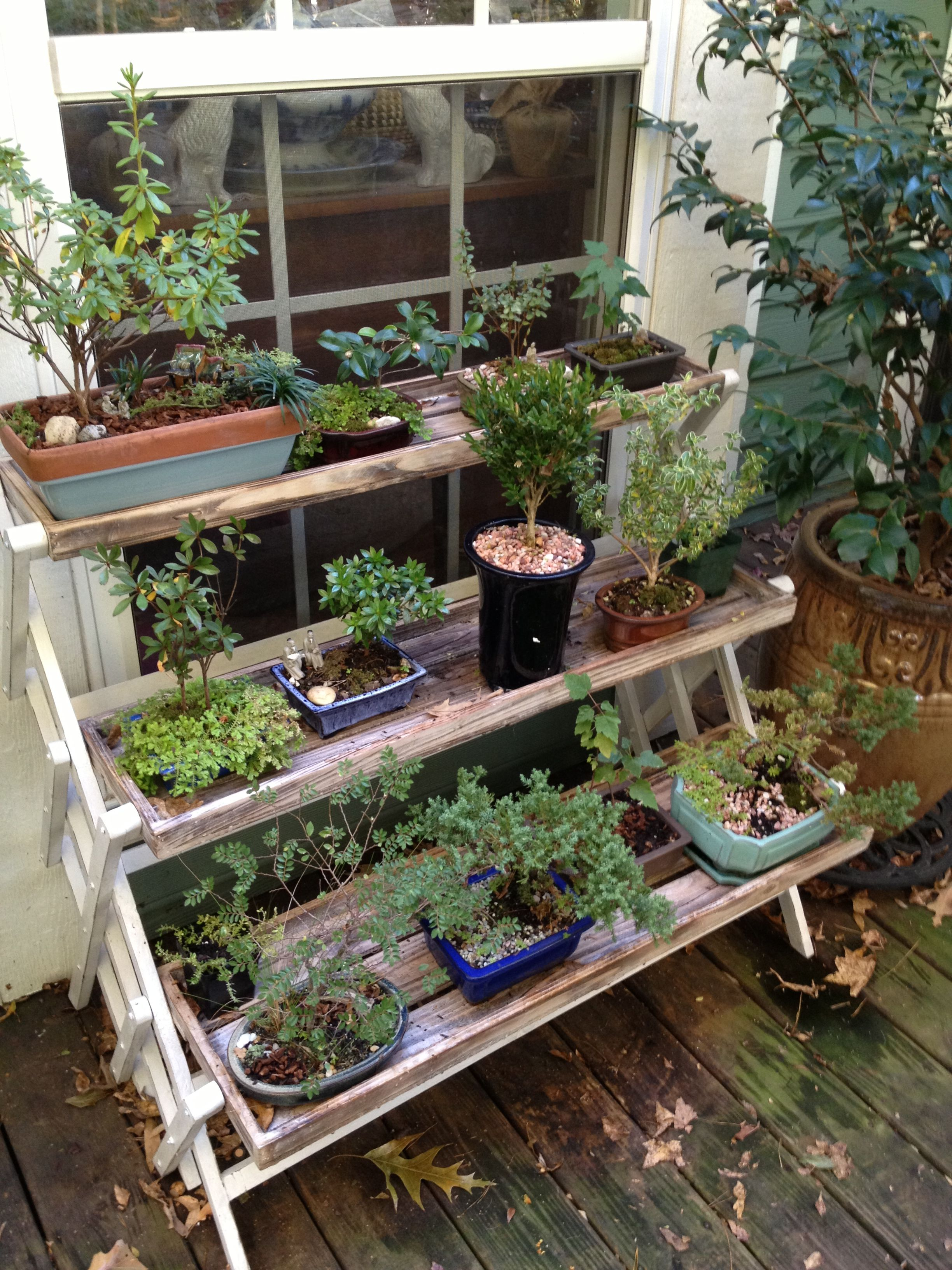 Some of my bonsai collection.