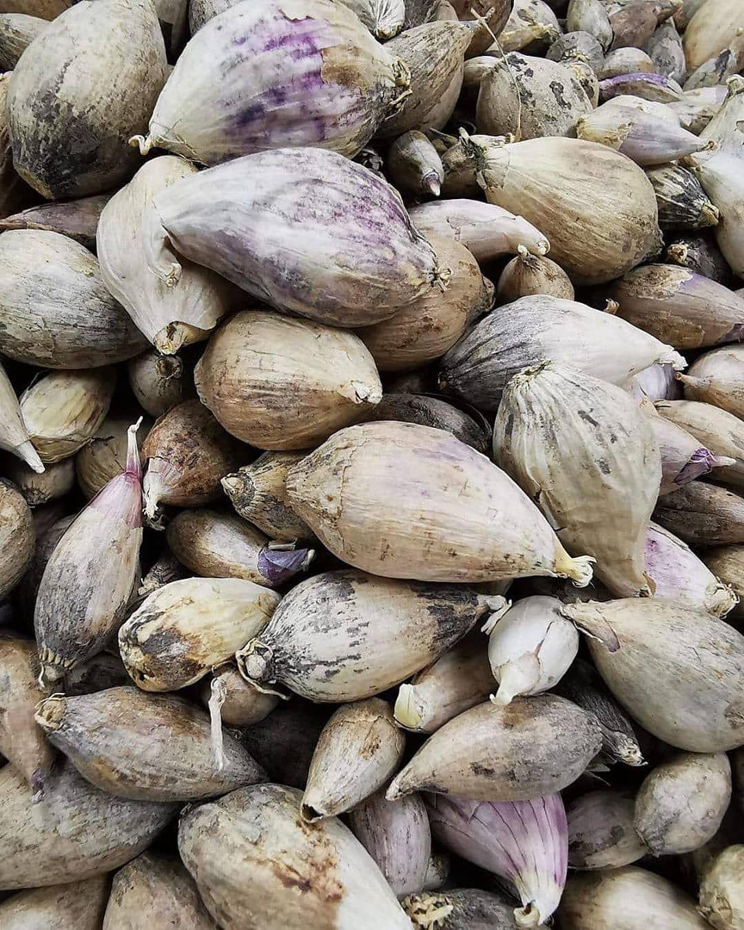 اعلان وصول دفعه جديدة من ثوم الذكر اليمني Clear Nectar ثوم ذكر يمني الكيلو بـ350 درهم الثوم الذكري هو من أقدم ا Vegetables Garlic Stuffed Mushrooms
