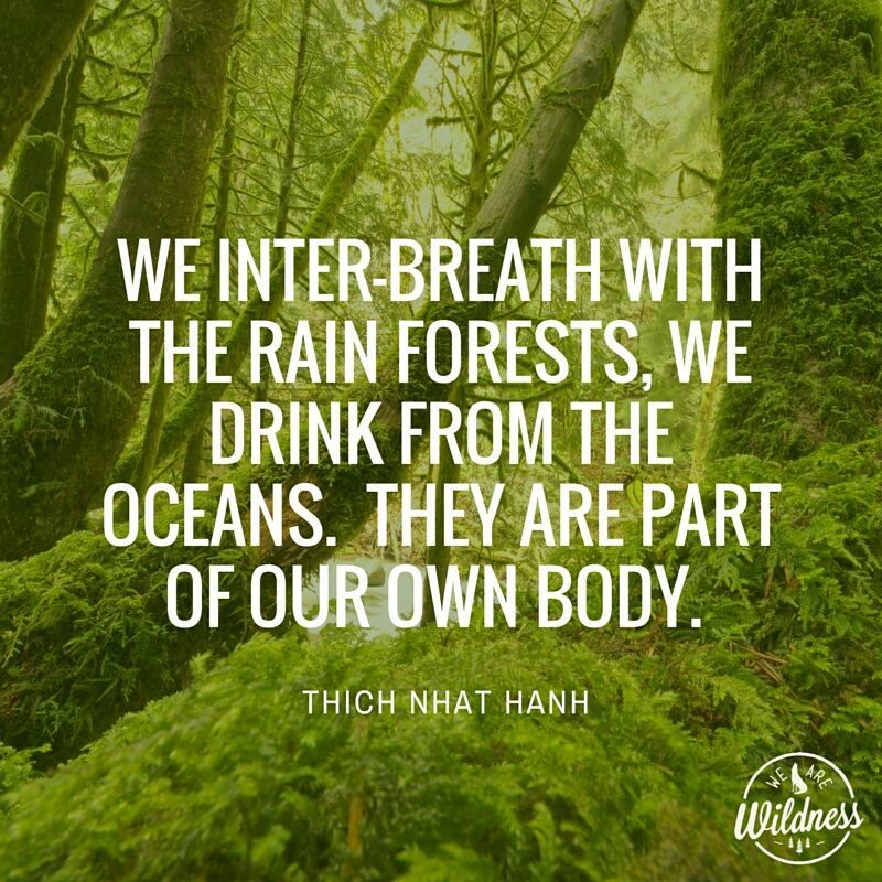 Thich Nhat Hanh                                                                                                                                                       More