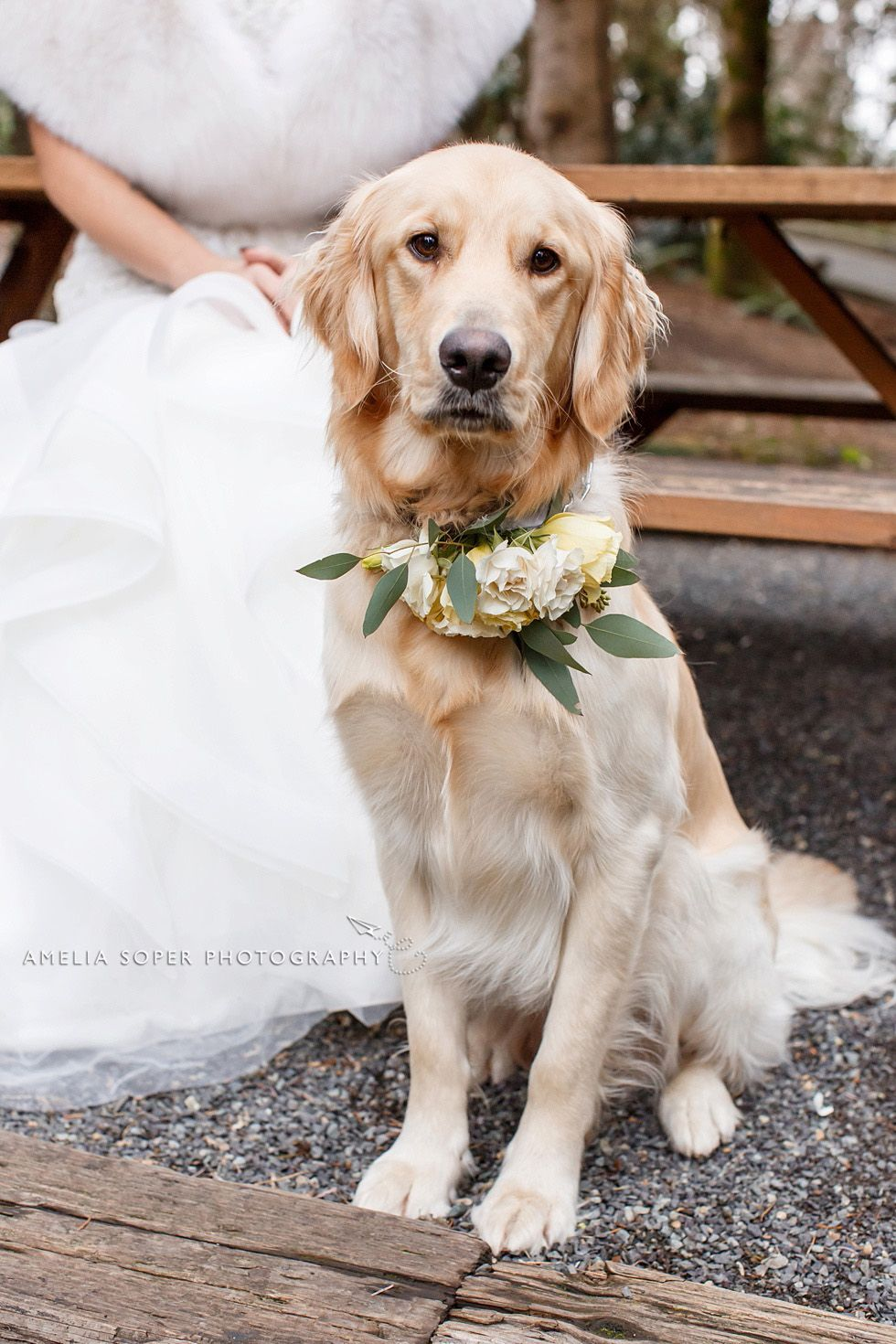 Golden Retriever Wedding Dog With Yellow Floral Collar At Jm