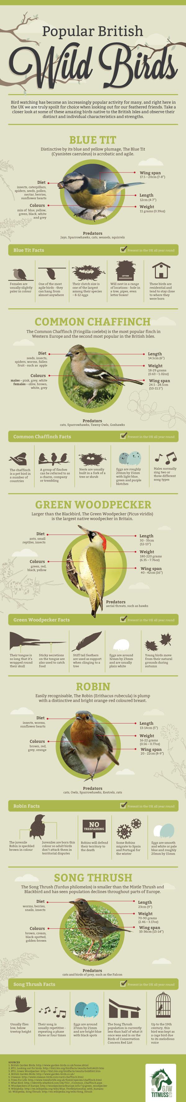 How To Encourage Wild Birds To Your Garden Birdie Board