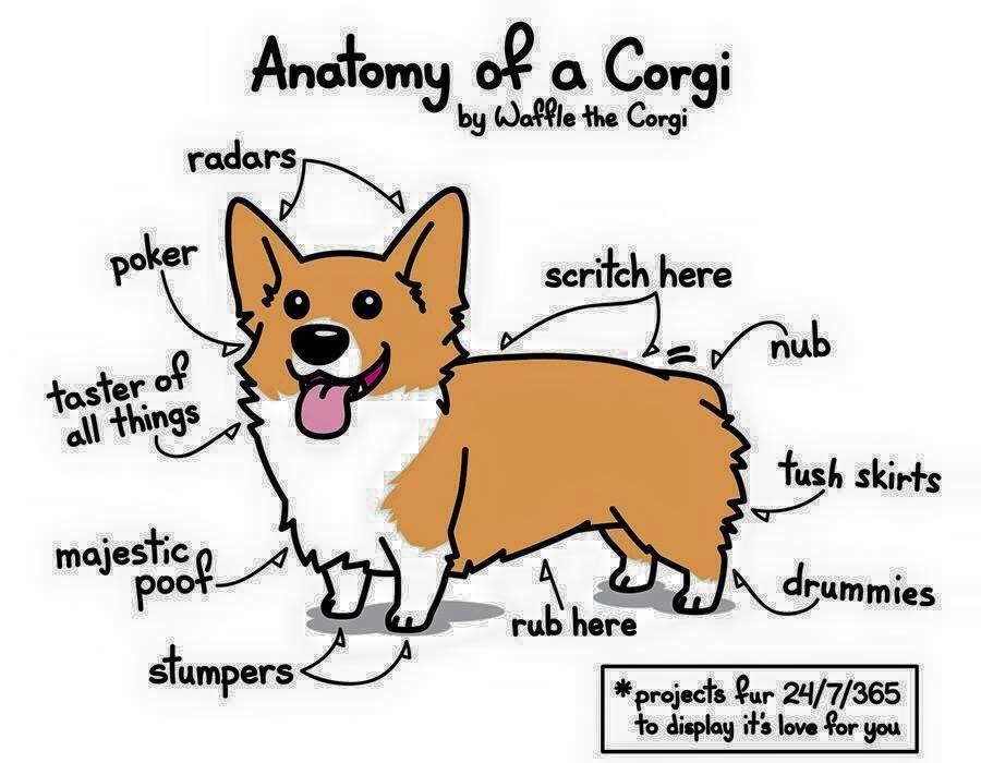 Slightly Different Anatomy Of A Corgi Drawing Corgi Doodle Corgi Drawing Corgi Funny