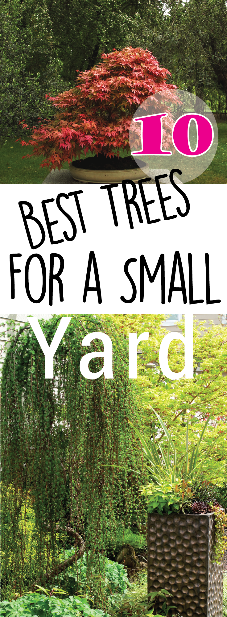 10 Best Trees For Small Yards – Making Diy Fun Small 400 x 300
