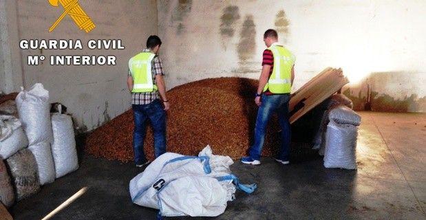 Detienen a una persona e imputan a otras dos por robar 2.500 kilos de almendras en Segorbe, Gaibiel y Navajas