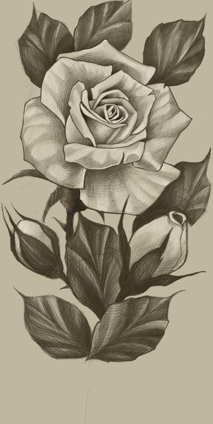 Pin By Moist Bone Daddy On Eskizy In 2020 Rose Tattoos Rose Drawing Roses Drawing