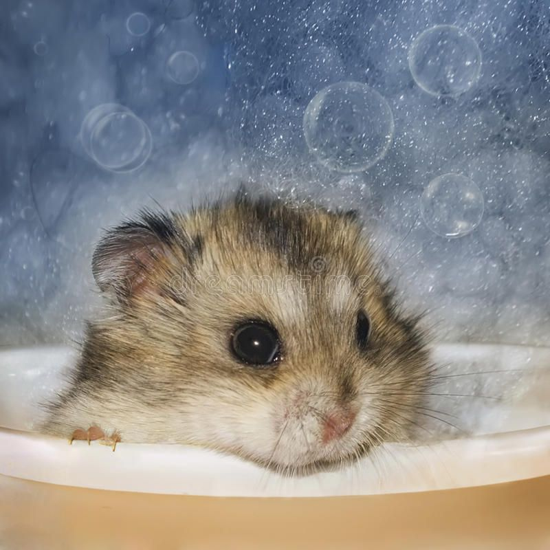 Hamster Bathes Jungar Hamster Toy Is Bathed In The Bath With Bubbles Aff Jungar Hamster Hamster Bathes Bath Ad