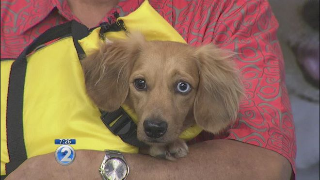 Safety precautions for taking your pet on board a boat