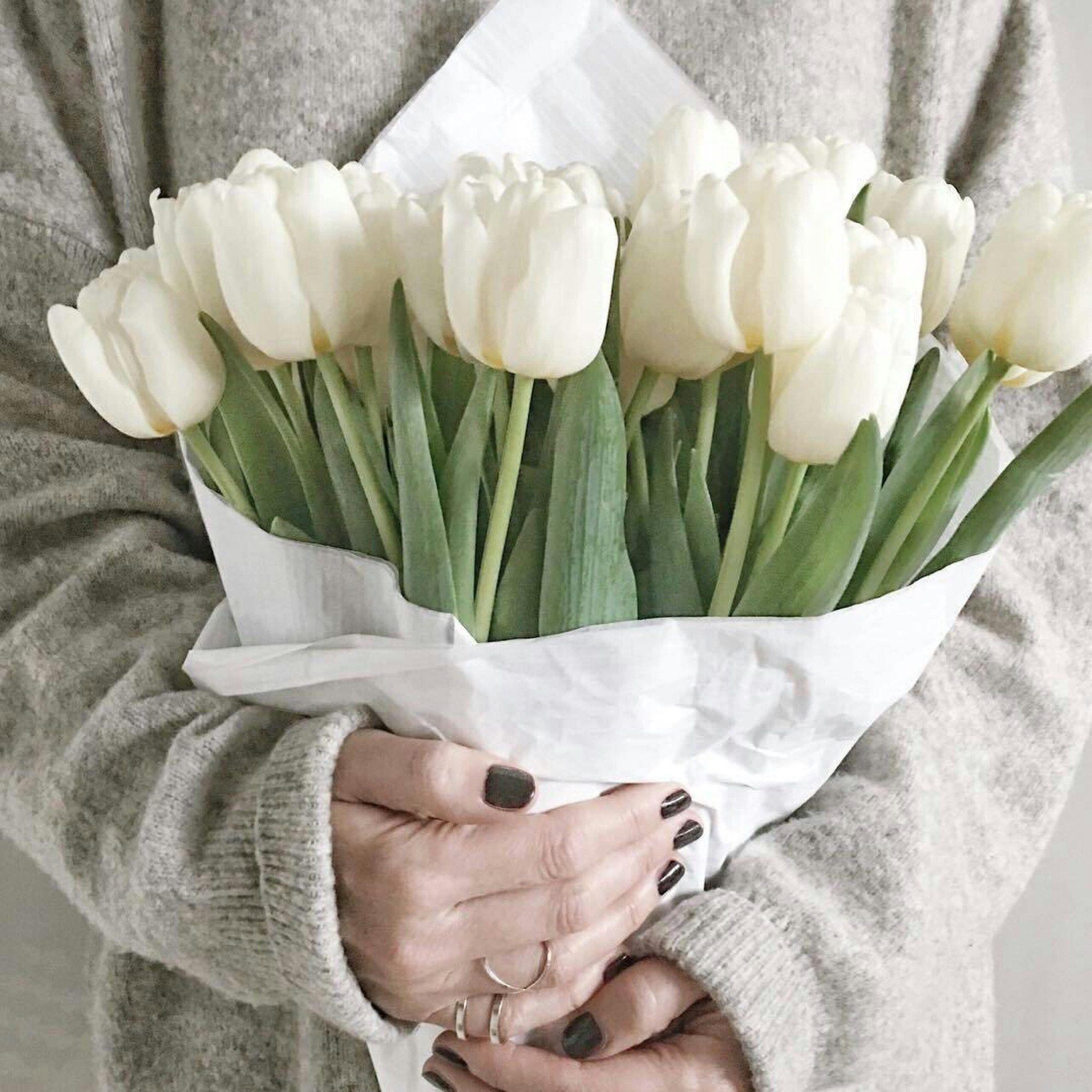 теория тюльпаны фото на аву нашей статье